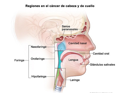 Head and Neck Cancer Regions Spanish